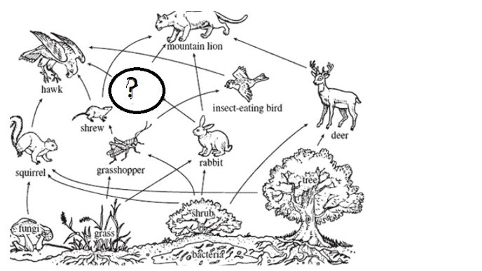 From the following food chain find out the missing animal